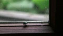 Chuyện con ruồi và ô cửa kính – nỗ lực chưa phải là tất cả